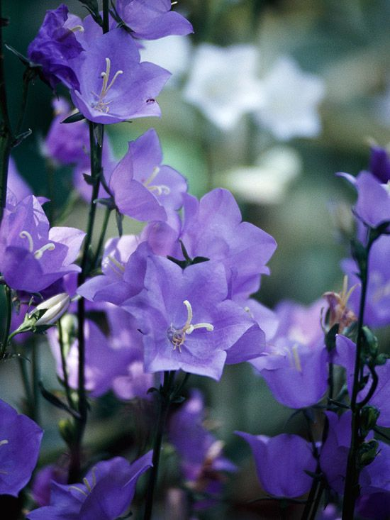 The 18 Best Plants For Cottage Gardens Cool Plants Cottage Garden Cottage Garden Plants