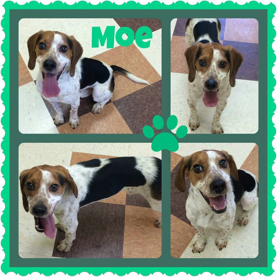 adoptable at Joliet township animal control on Facebook