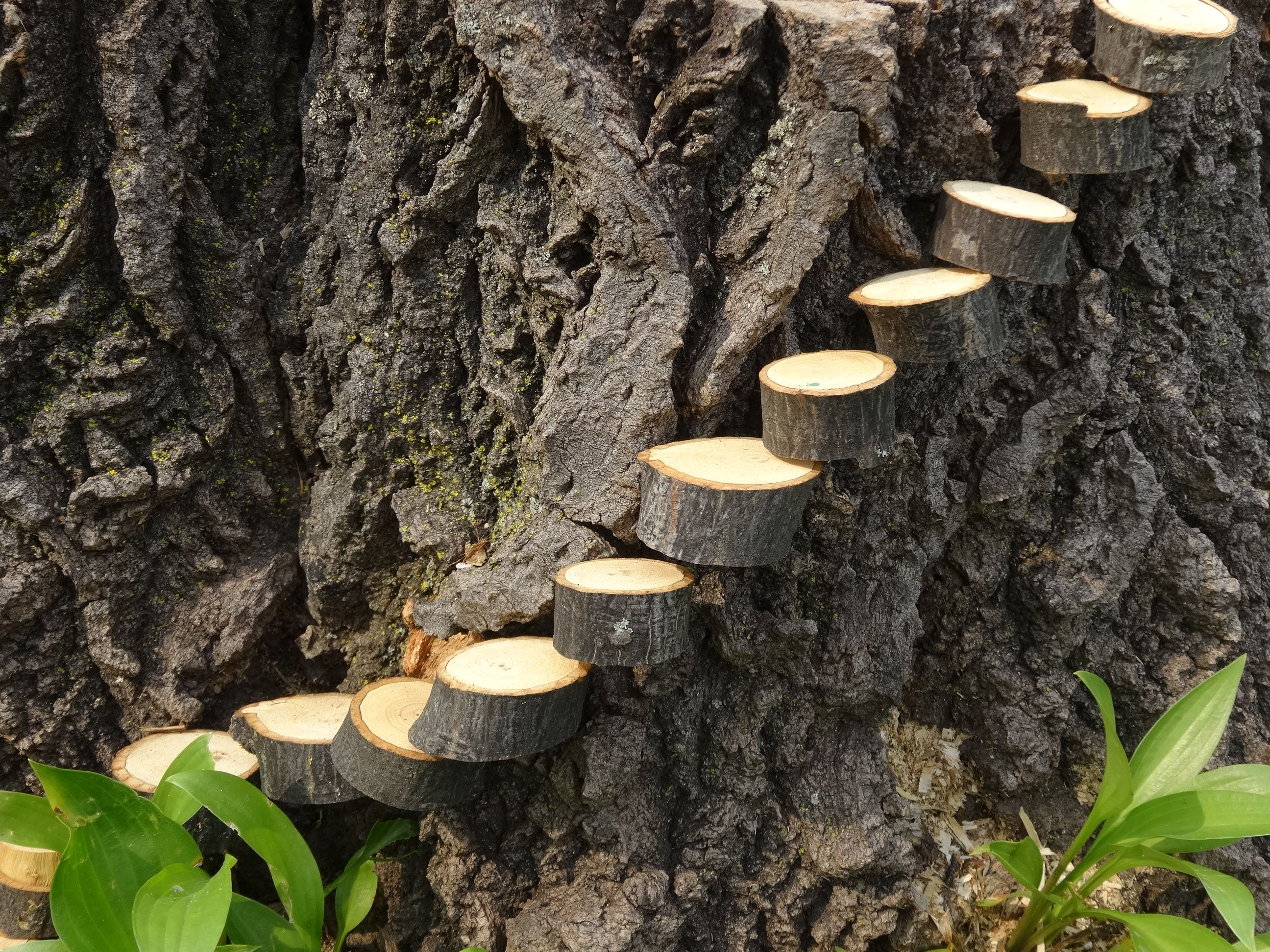 Clever idea from my husband steps to tree stump fairy for Tree trunk slice ideas