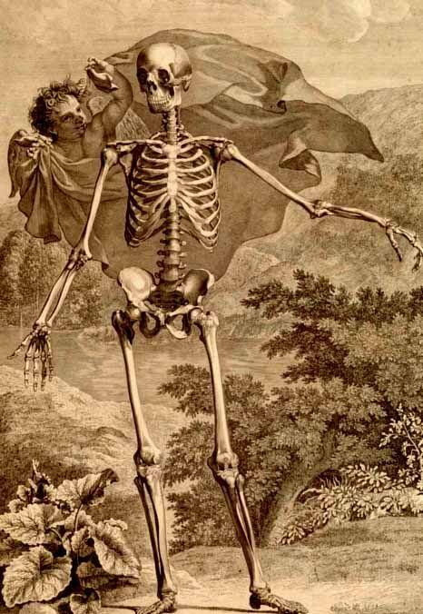 Bernhard Siegfried Albinus (1697-1770) (anatomist), Jan Wandelaar ...