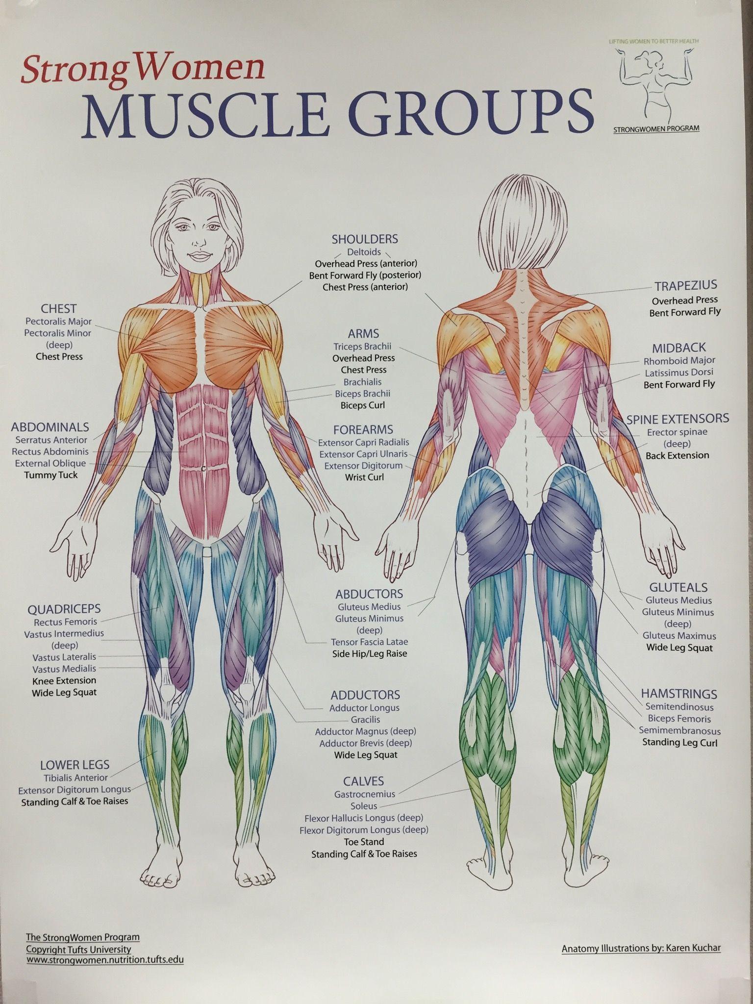 Pin de Mihaita Roata en muscle   Pinterest   Anatomía, Ejercicios y ...