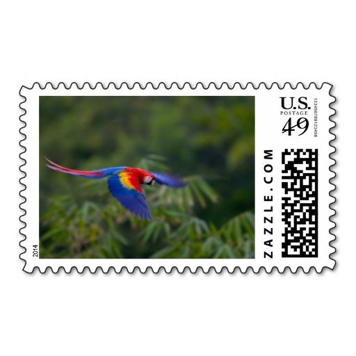 Colorful scarlet macaw, Costa Rica Postage. This great business card design is available for customization. All text style, colors, sizes can be modified to fit your needs. Just click the image to learn more!
