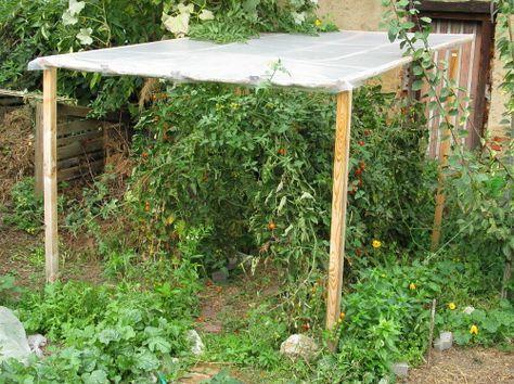 tomaten l ngere ernte durch regenschutz garten pinterest ernte tomaten. Black Bedroom Furniture Sets. Home Design Ideas