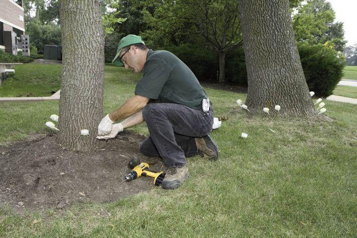 Tree Preservation Illinois Tree care, Plant health