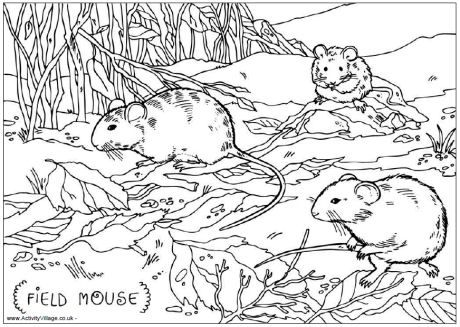 Field mouse colouring page | Images/Graphics | Pinterest | Mice ...