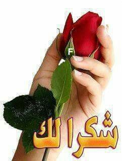 Pin By Khamis Allsadawy On Roses Roses Good Night Photo Images Cute Good Morning Images Muslim Greeting