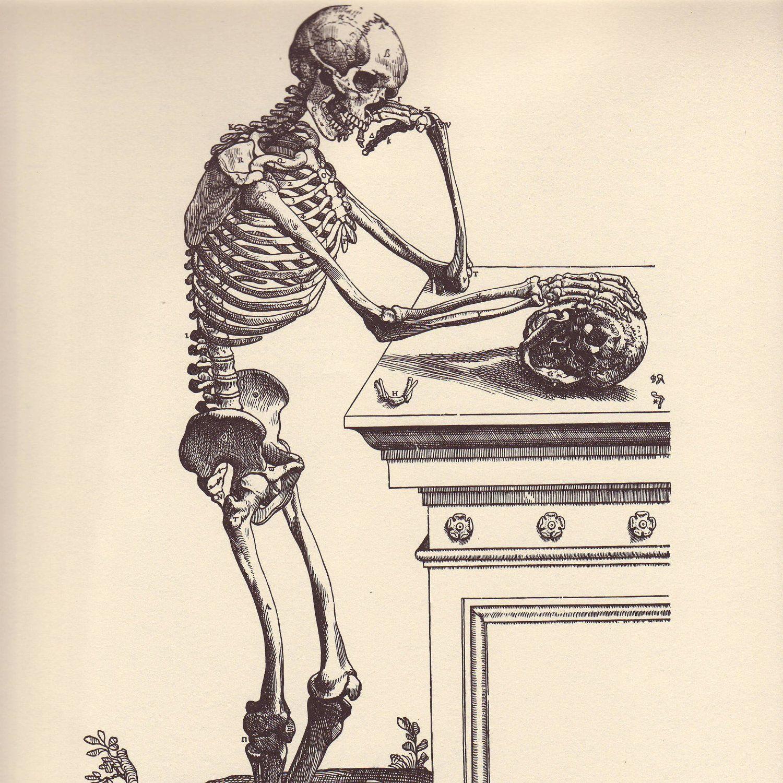 Vintage Anatomy Print, 1950 Skeletal Book Plate to Frame, Vesalius ...