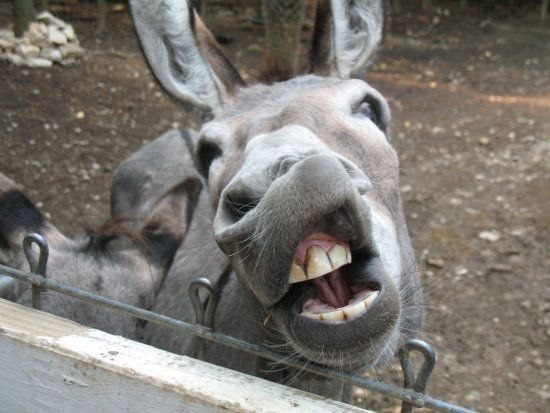 ugly donkeys pictures ...