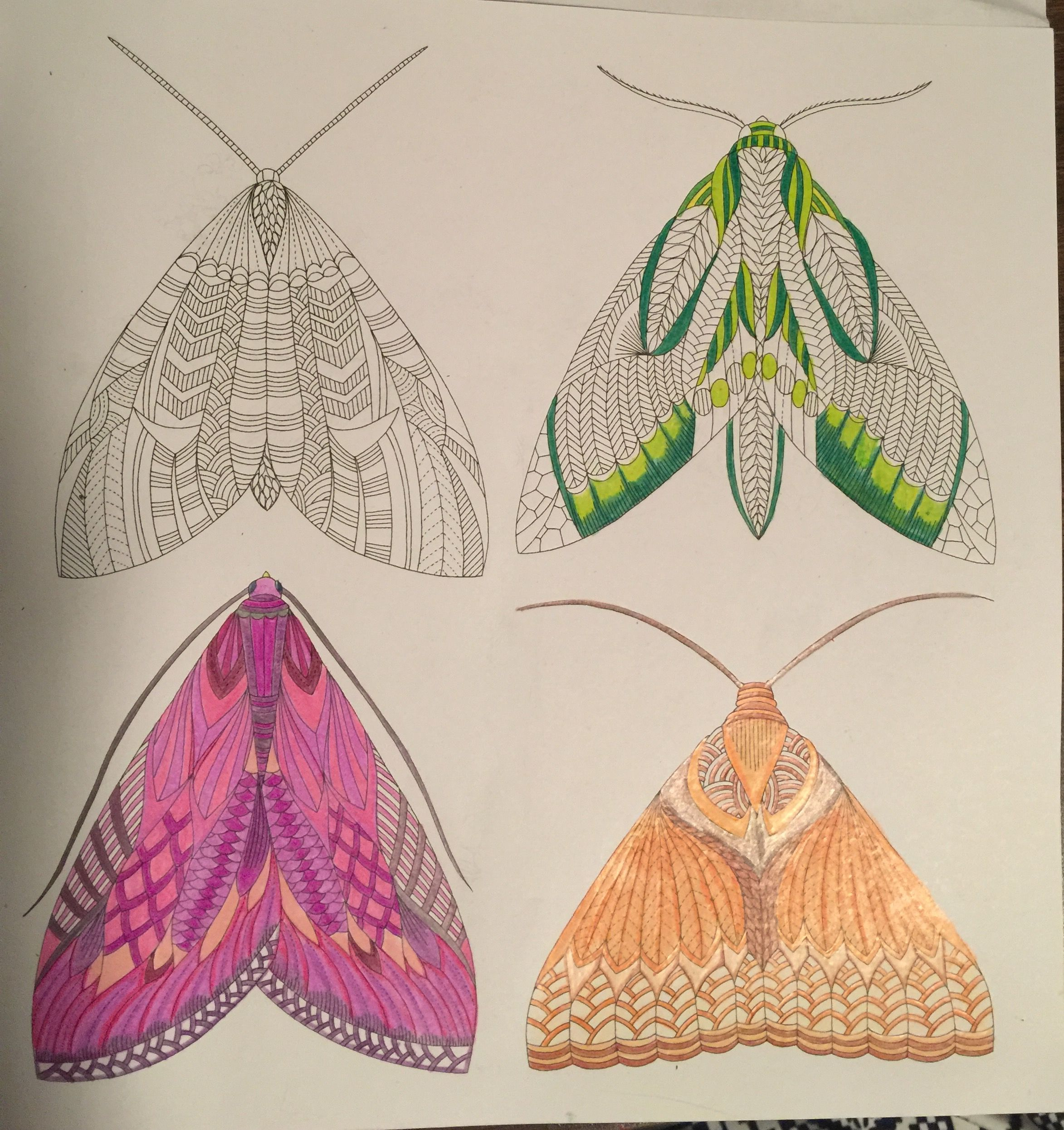 Color me draw me animal kingdom book - Animal Kingdom Millie Marotta Color Me Draw Moths Coloring Book