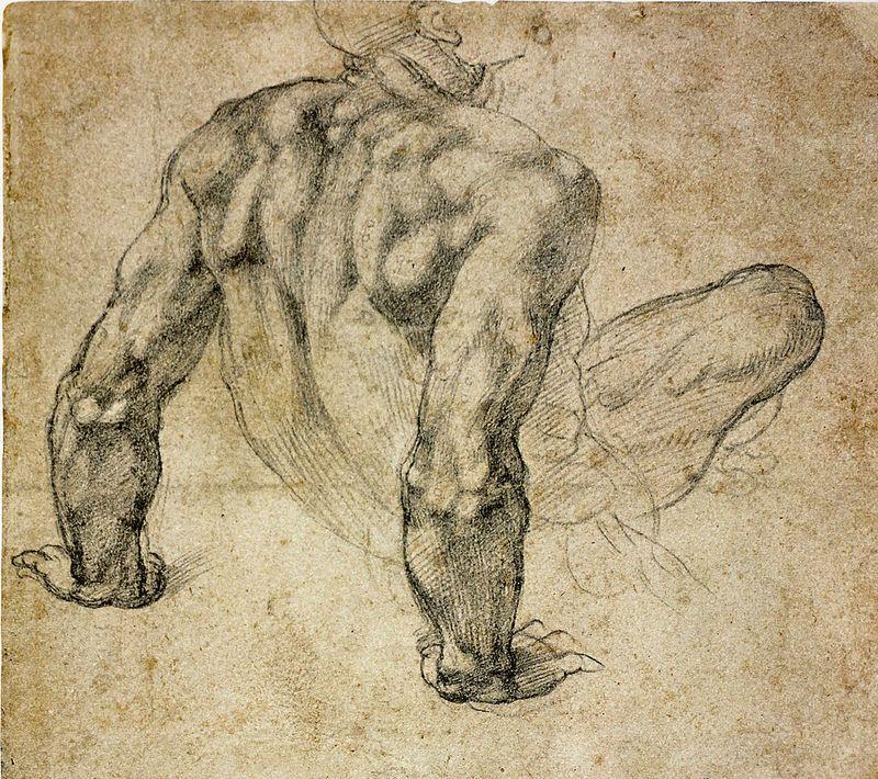 anatomy by Michelangelo - - | Anatomía, Miguel angel y Ángeles
