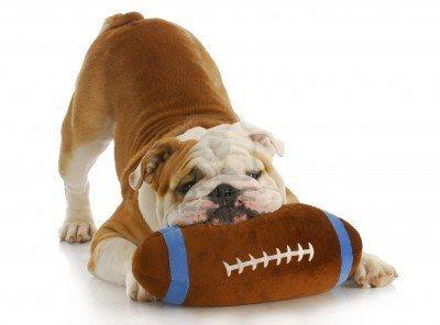 Indianapolis Colts Football Dog Cute Animals Bulldog Puppies Dogs