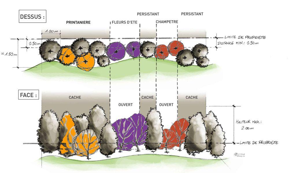 la haie vive botanic vegetation pinterest haies jardins et am nagement paysager. Black Bedroom Furniture Sets. Home Design Ideas