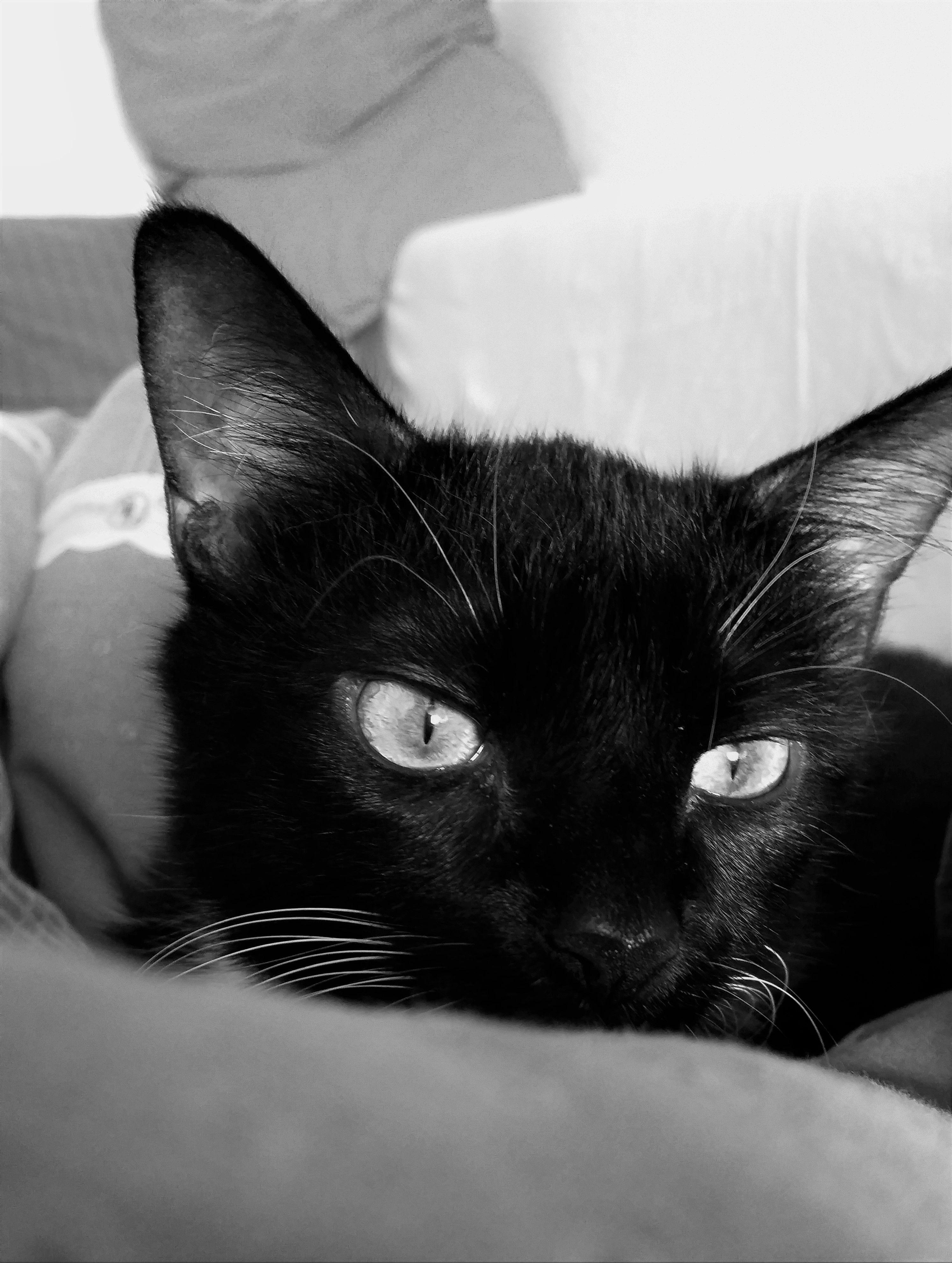 Tagtraumen Der Katze Schwarz Weiss Katze Schwarz Weiss Schwarz