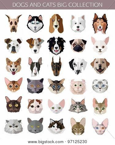 Set Of Flat Popular Breeds Of Cats And Dogs Icons Vector