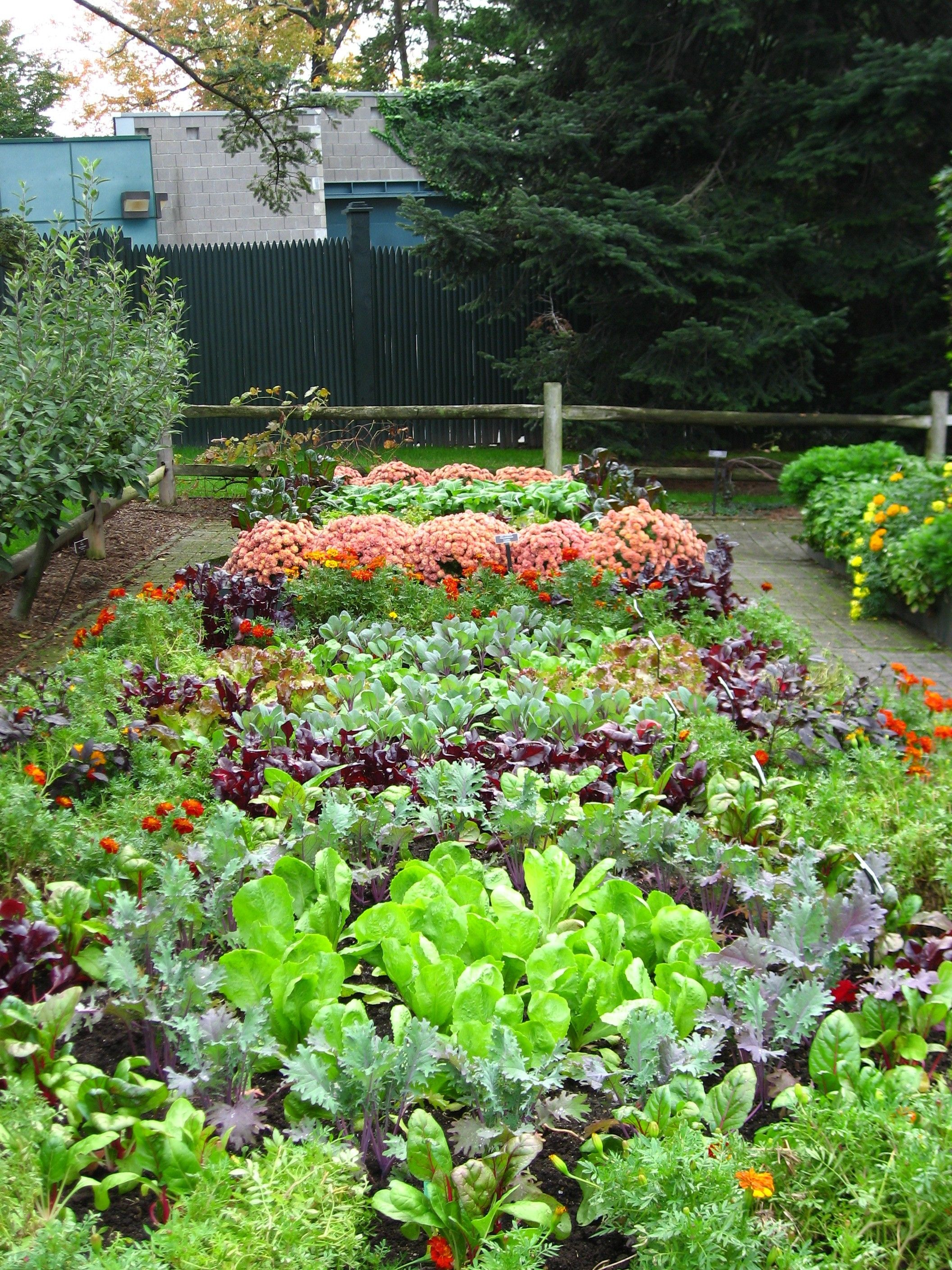 Front Yard Vegetable Garden Ideas blend a variety of vegetables together in a veggie garden to