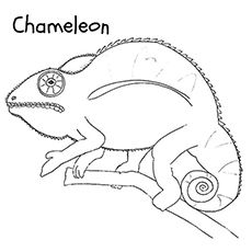 Chameleon Coloring Pages Free Printables Momjunction Coloring Pages Chameleon Color Free Printables
