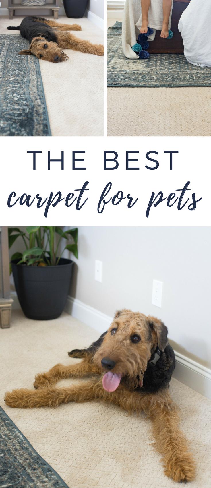 The Best Carpet For Pets Home Depot Pet Proof An Honest Review