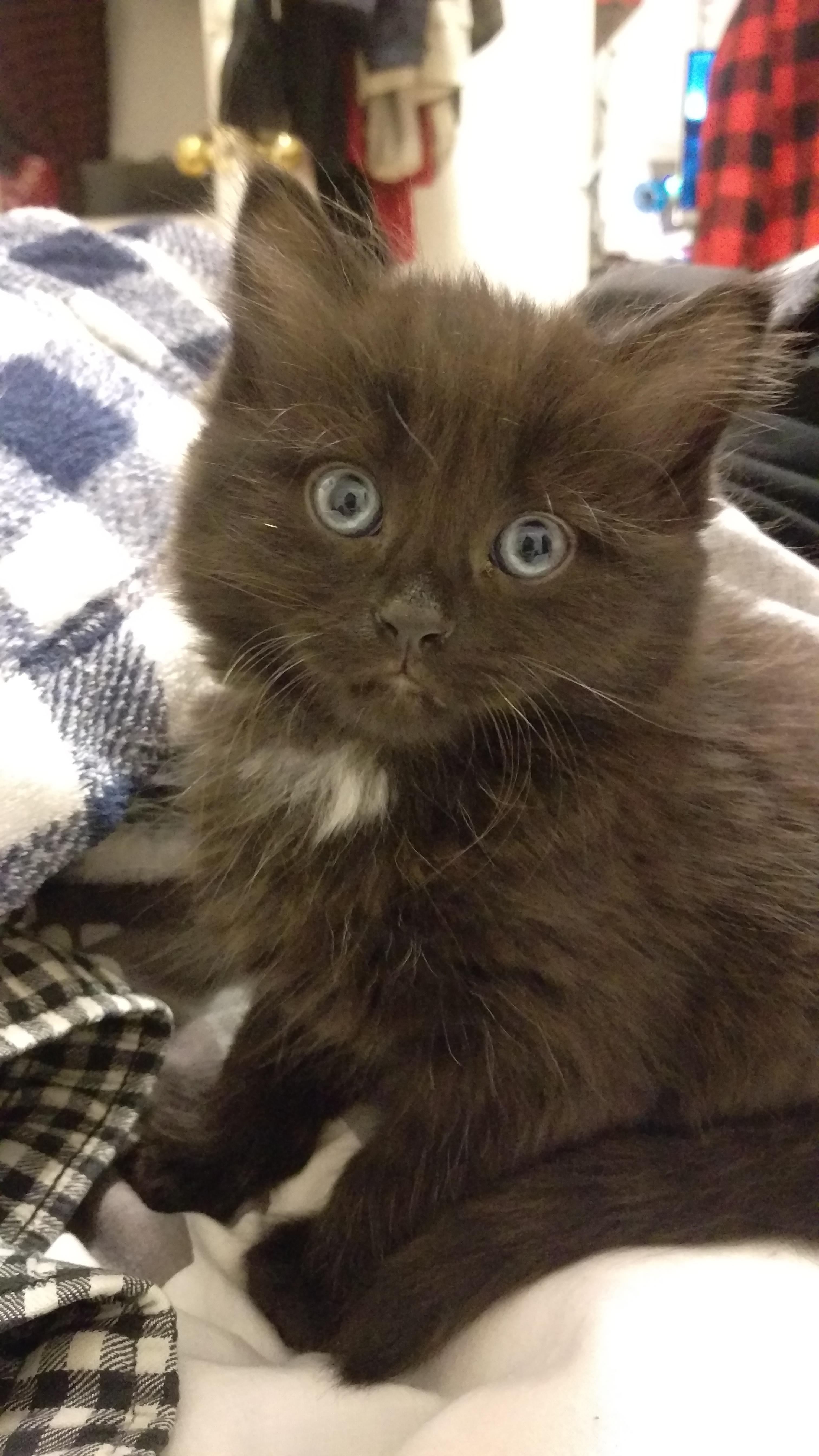 Meet Youkai ! http://ift.tt/2oE7NVF
