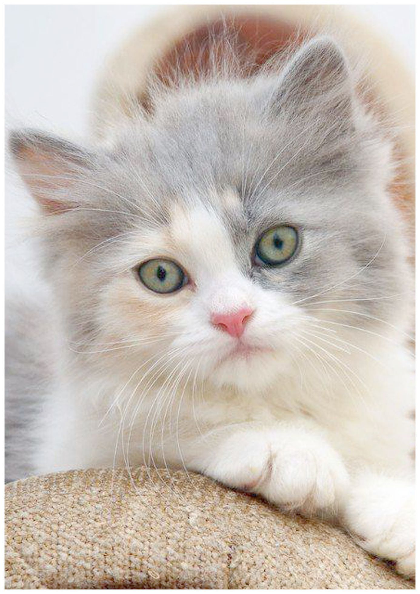 Cute Animals In Costumes Video Cats And Kittens For Sale Hampshire At Cute Jungle Animals Coloring Pages Our Kitten Pictures Kittens Cutest Cats And Kittens