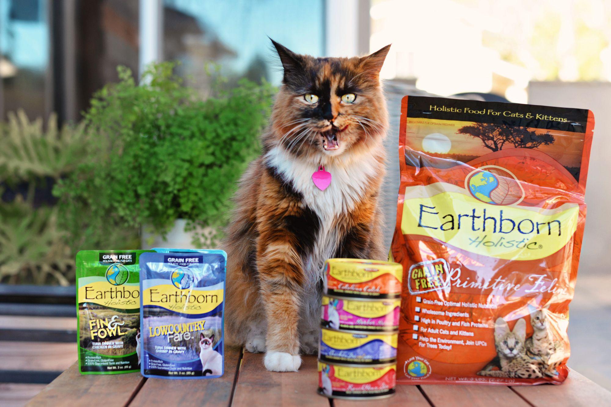 Earthborn Holistic Food For Cats In 2020 Holistic Cat Food Holistic Recipes Dry Cat Food