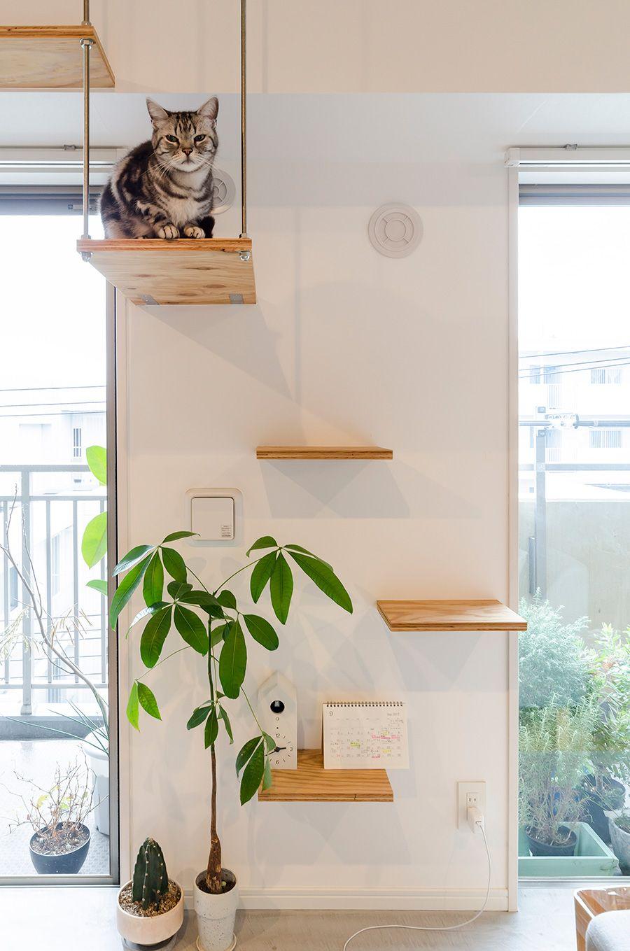 窓際のキャットウォークは 日当たりのよい特等席 猫の家具 インテリア 家具 ねこ インテリア