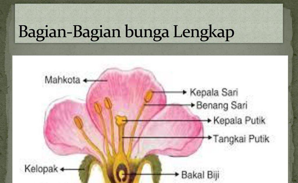 Terbaru 27 Gambar Bunga Lengkap Beserta Bagiannya Gambar Bunga Lengkap Gambar Bunga Bunga Lengkap Pengertian Dan Penjelasannya Science Booth Bu Di 2020 Bunga Gambar