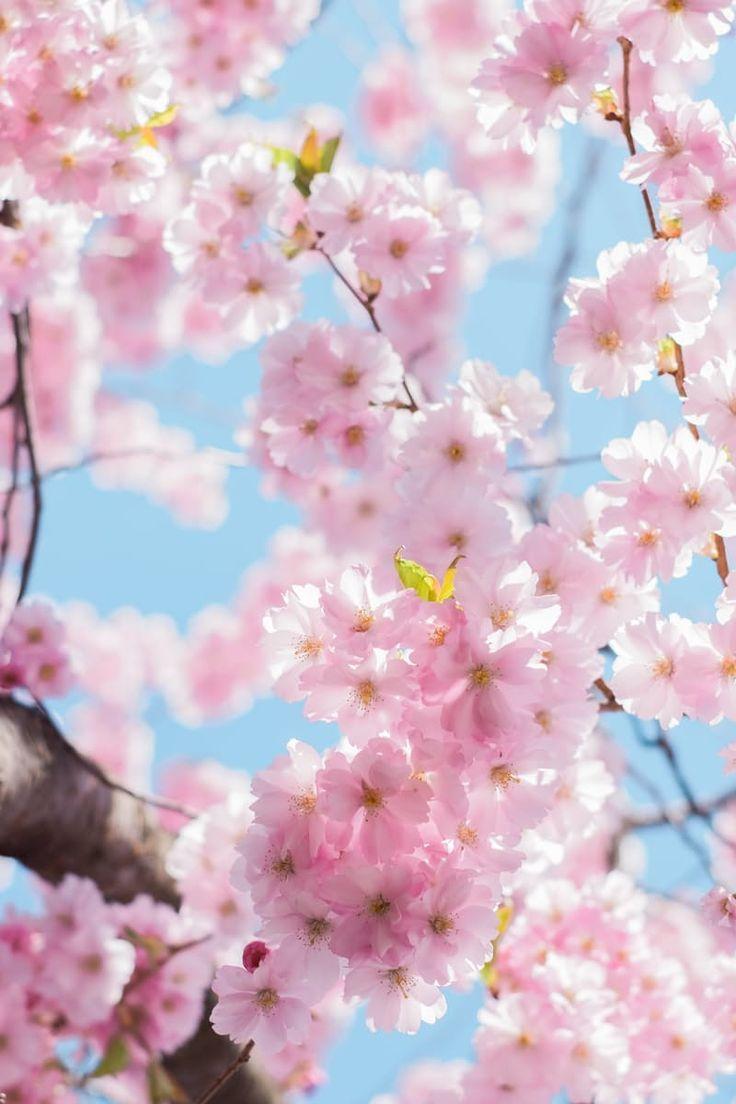 Happy Weekend! in 2020 (mit Bildern) | Liebe blumen, Schöne blumen, Blumen
