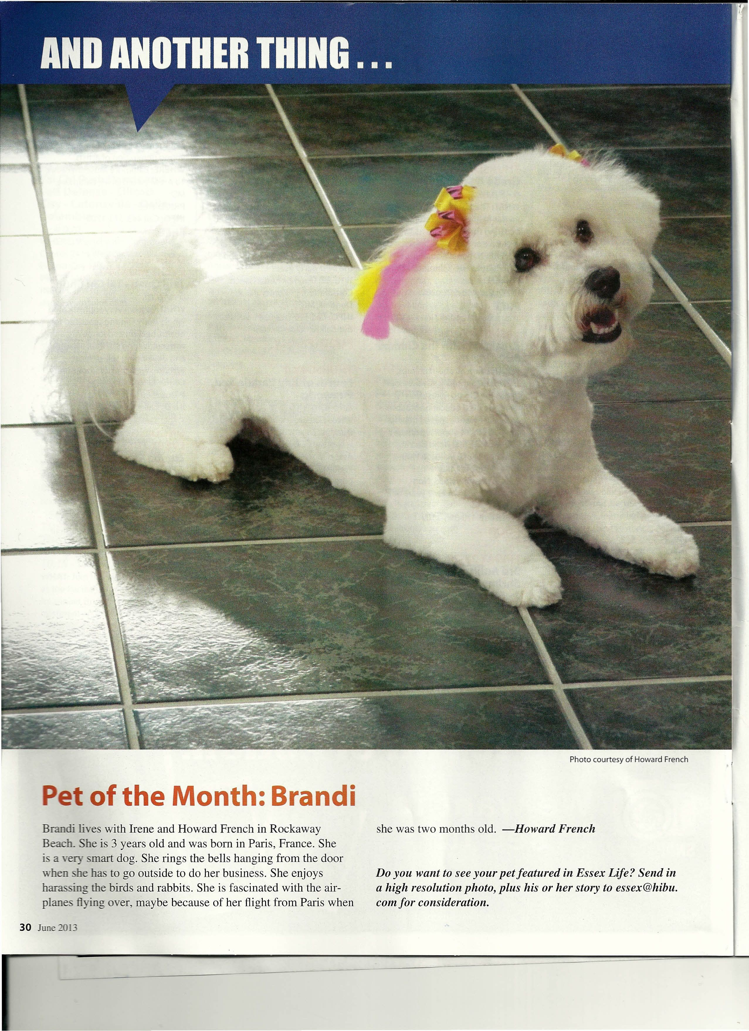 Brandi Makes Dog Of The Month In Maryland Bichon Frise