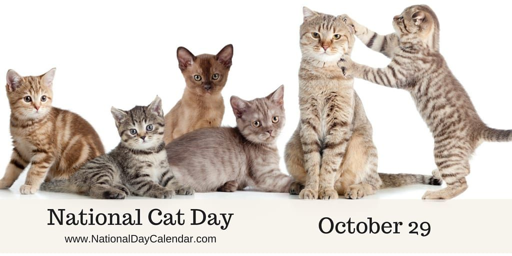 National Cat Day October 29, 2019 Cat day, National