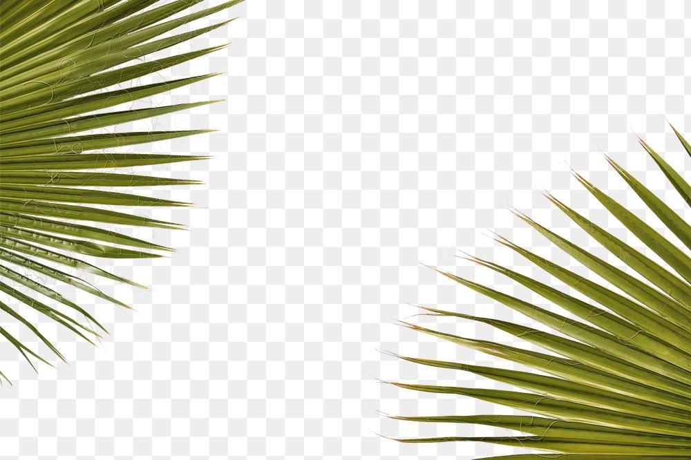 Natural Green Palm Leaves Frame Premium Image By Rawpixel Com Mckinsey Palm Tree Vector Palm Tree Images Palm Leaf Design