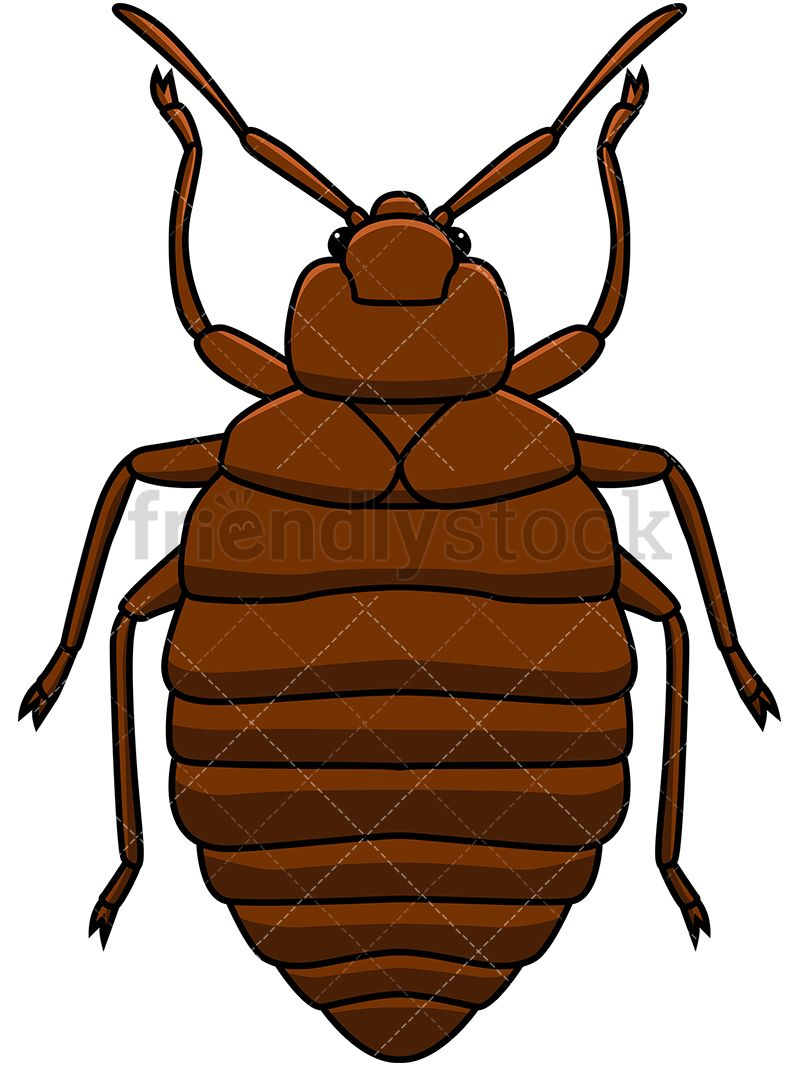 Bed Bug Top View Bugs Clip Art Bed Bugs