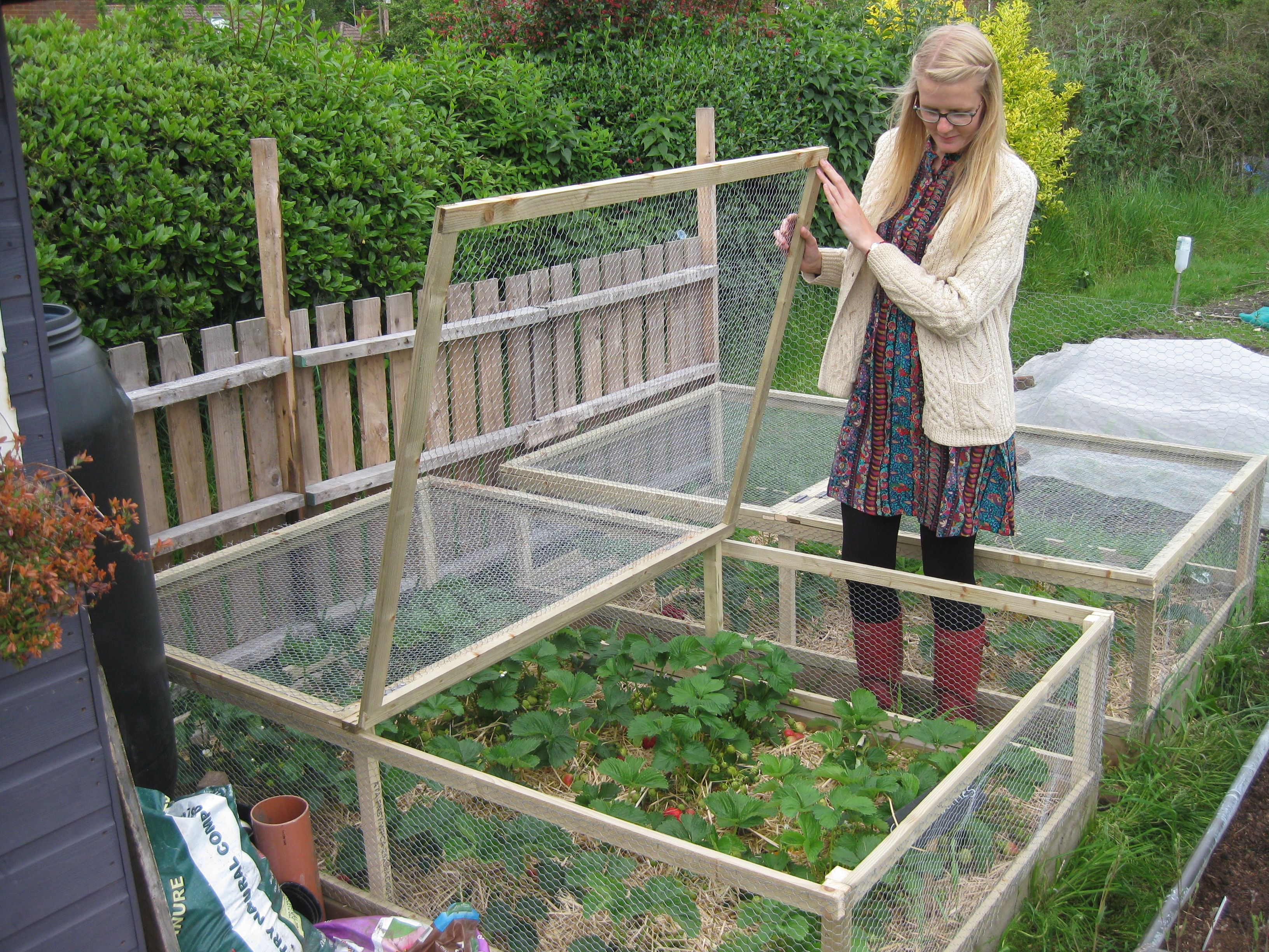 Chicken Wire Protection Google Search Vegetable Garden