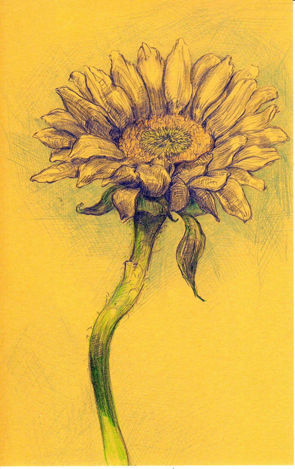 Sunflower perfect tattoo tattoos pinterest sunflowers tattoo