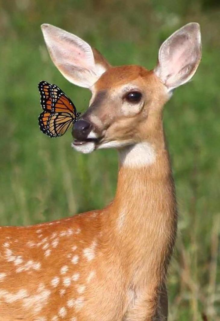 вас самые красивые животные в мире картинки нашем обзоре