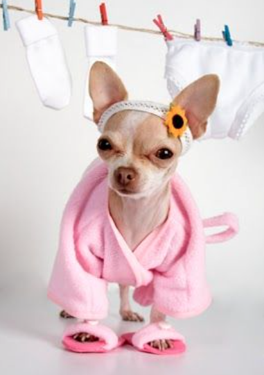 Funny Dog Outfits Blue Bird Green Diy Craft Happiness Blog