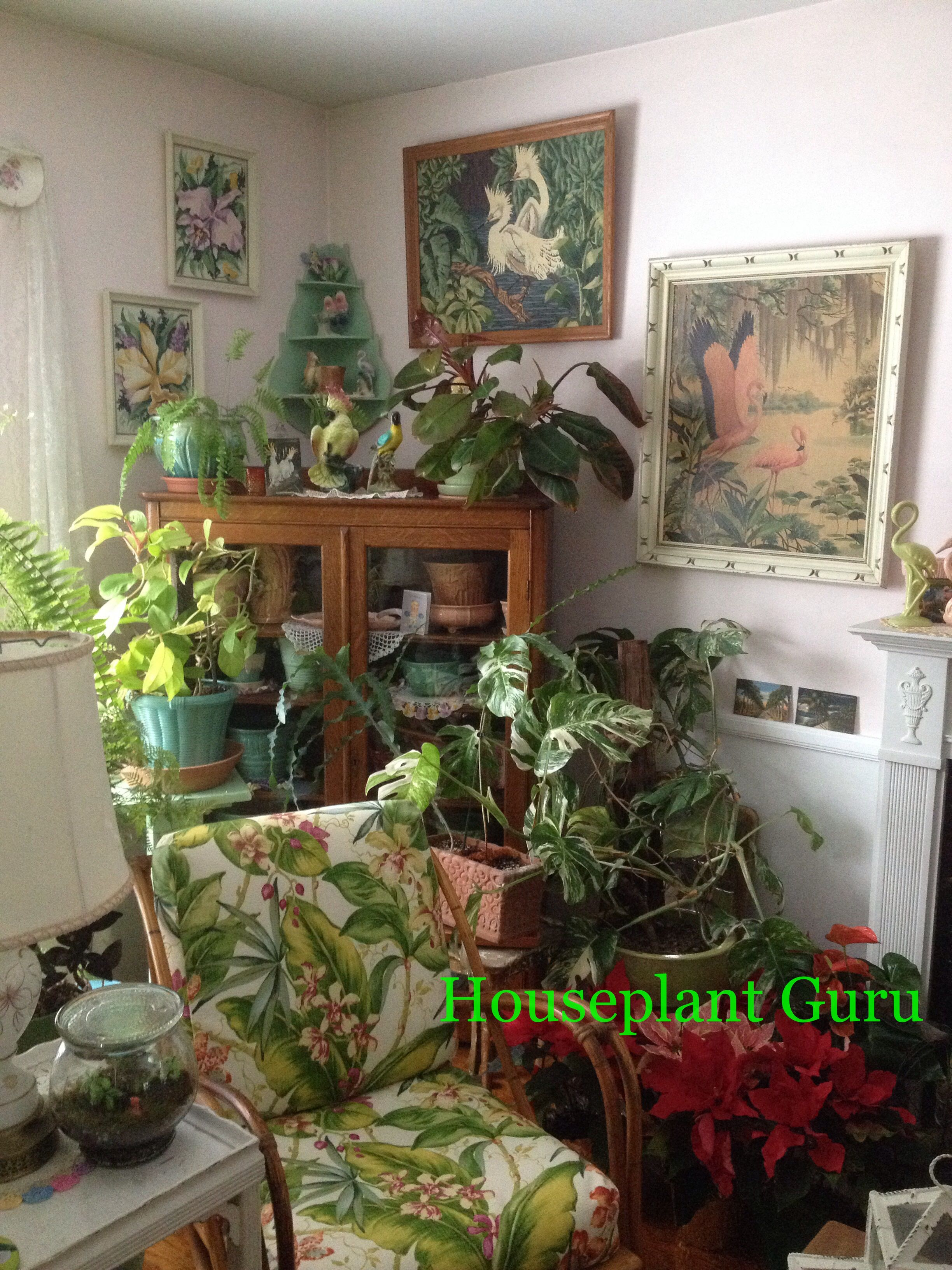 Corner of my living room houseplants houseplants pinterest houseplants living rooms and room for Living room with indoor plants