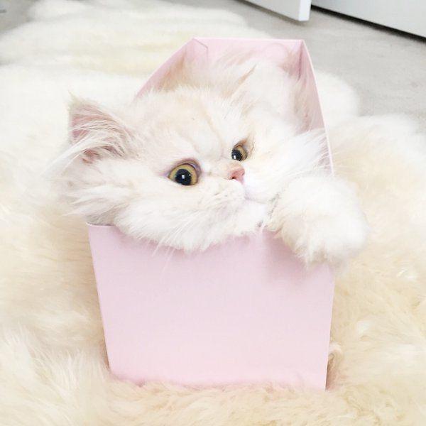𝓒𝓪𝓷𝓭𝔂 🎀 𝓛𝓲𝓬𝓲𝓸𝓾𝓼 | Happy animals, Kitten pictures, Cat bling
