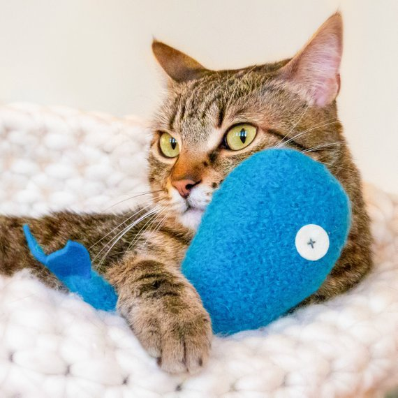 Cat Toys Organic Catnip Catnip Whale Azure Blue Catnip Toy Luxury Cat Toy Felted Cat Toy Catn Cat Toys Catnip Toys Felt Cat