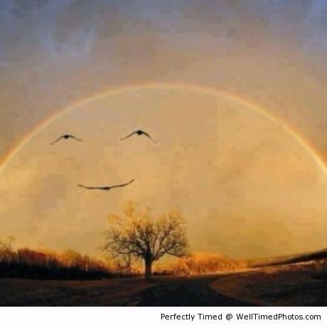Moon makes a smile – When a rainbow forms after some rain and the sunsets, you have some birds fly by. Almost like a smiling moon.   Well Timed Photos