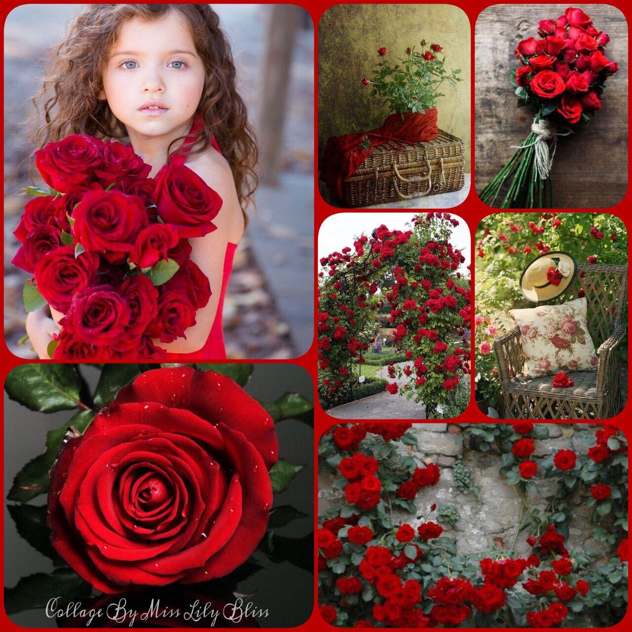 Фотоколлаж с розами на фото меха