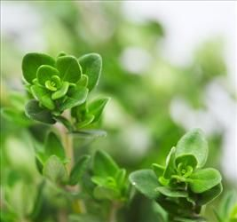 Thyme is the latest weapon against acne.