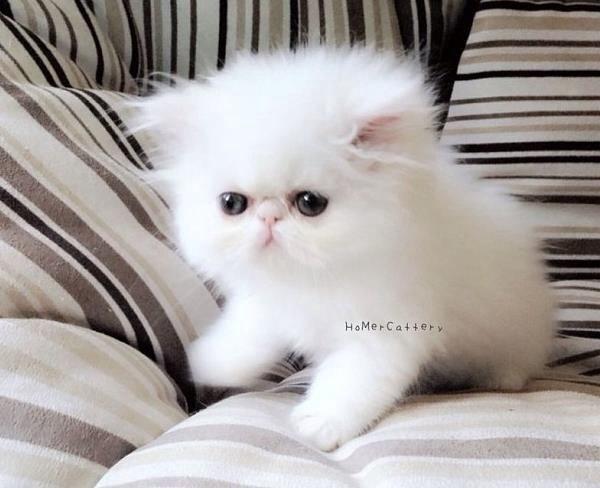 Pin On Cat S