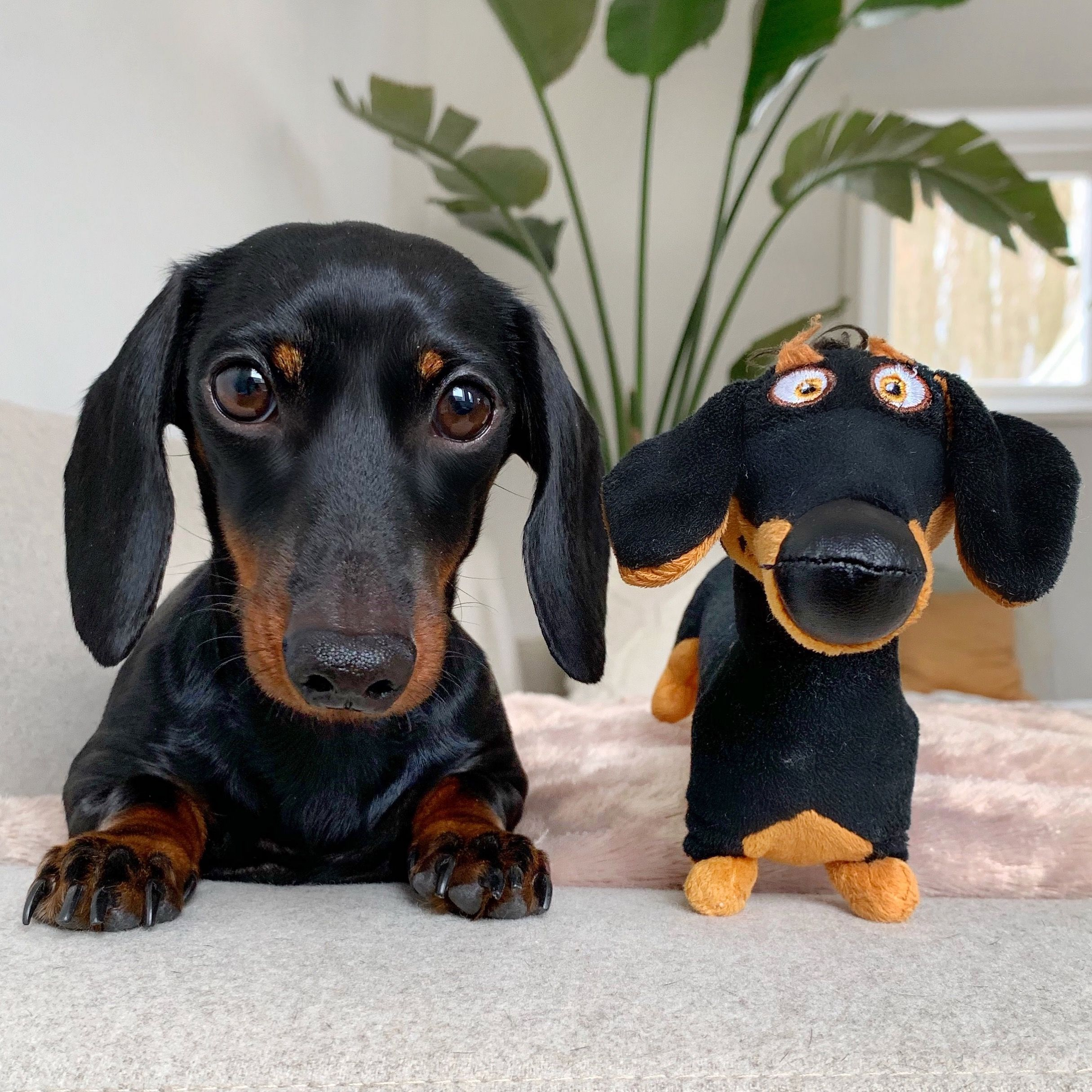 Pin On Dachshunds Rule