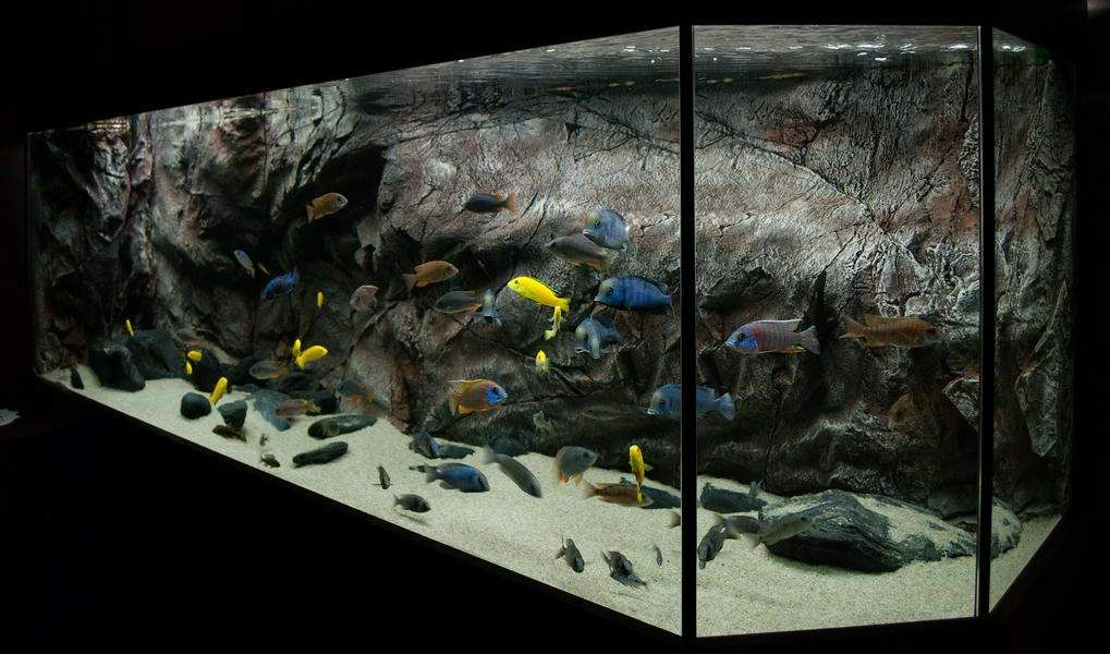 Diy Planted Aquarium Background Google Search Malawi Tanks