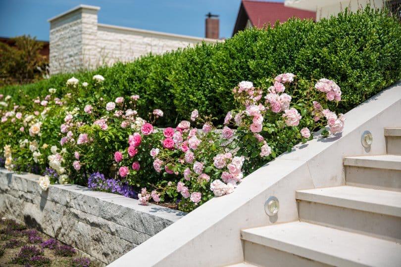 Gestaltungsideen für den Garten ohne Rasen #gartengestaltung ...