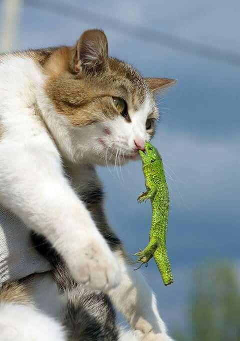 #gatos #animales