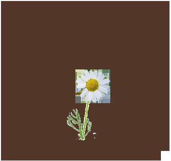 how to cancel mama earth