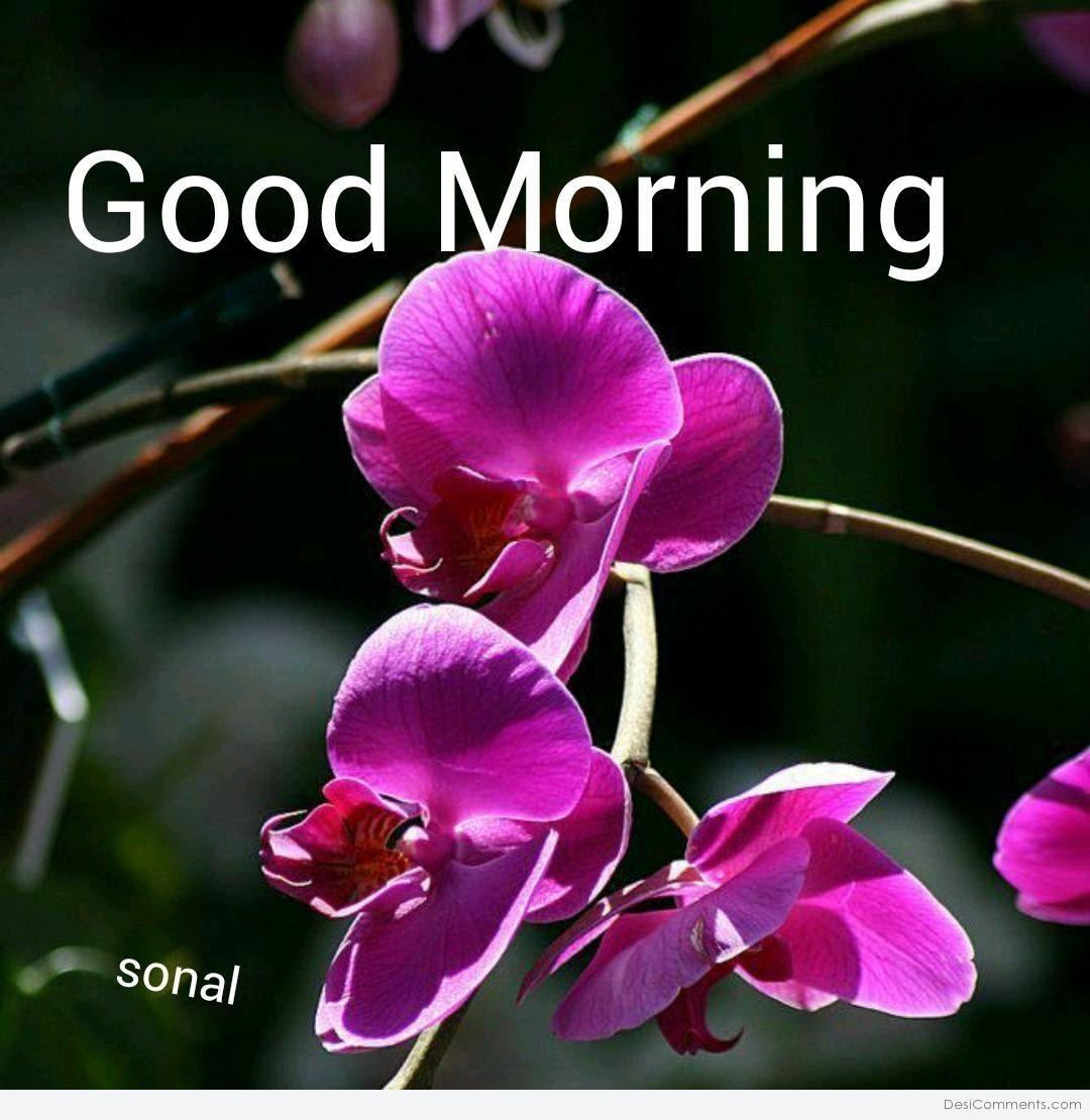 308970.jpg (1080×1110) Good morning cards, Good morning