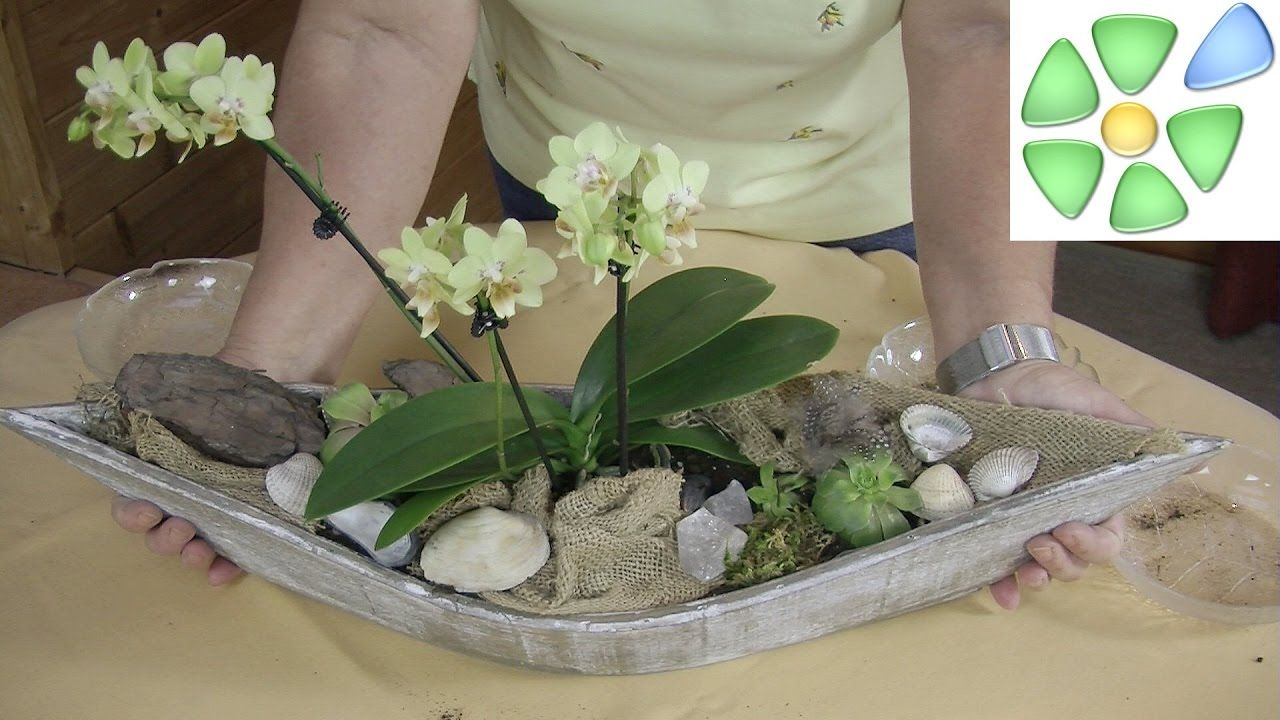 sideboard dekorieren traumschiff mit orchidee bergkristall hauswurz dekorace. Black Bedroom Furniture Sets. Home Design Ideas
