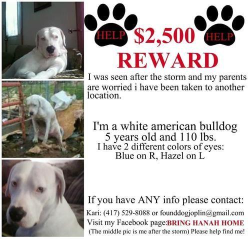 Missing Dog Joplin Mo Area Losing A Dog Losing A Pet
